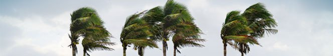 Business phone system: Hurricane season palms image