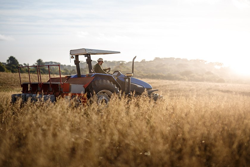 Tractor and driver in wheat field